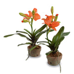 Cattleya Orchid in Terracotta - Orange