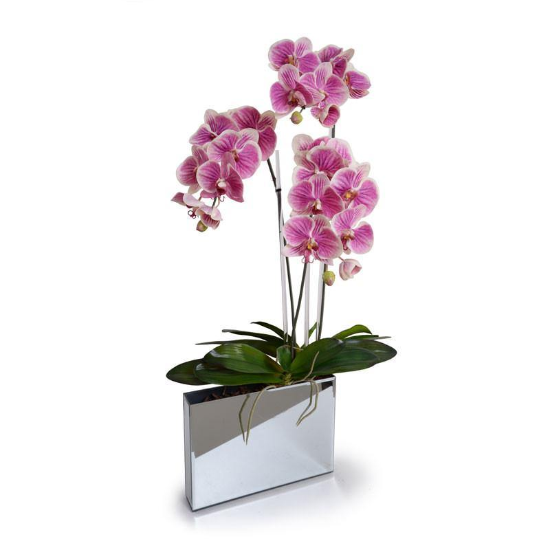 Phalaeonpsis Orchid x2 in Mirror Envelope - Fuchsia - New Growth Designs