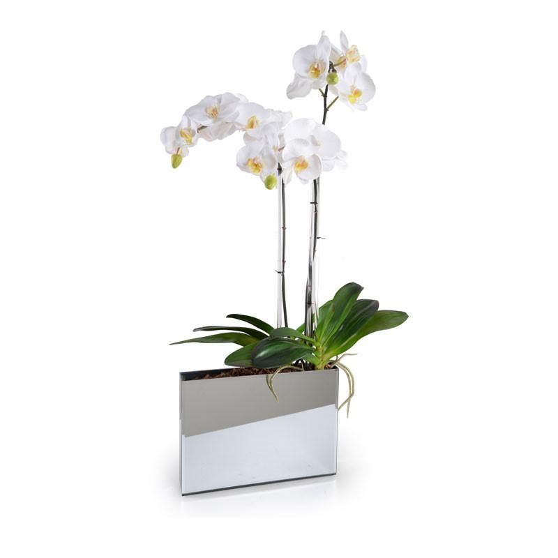 Phalaeonpsis Orchid x3 in Mirror Envelope - White - New Growth Designs