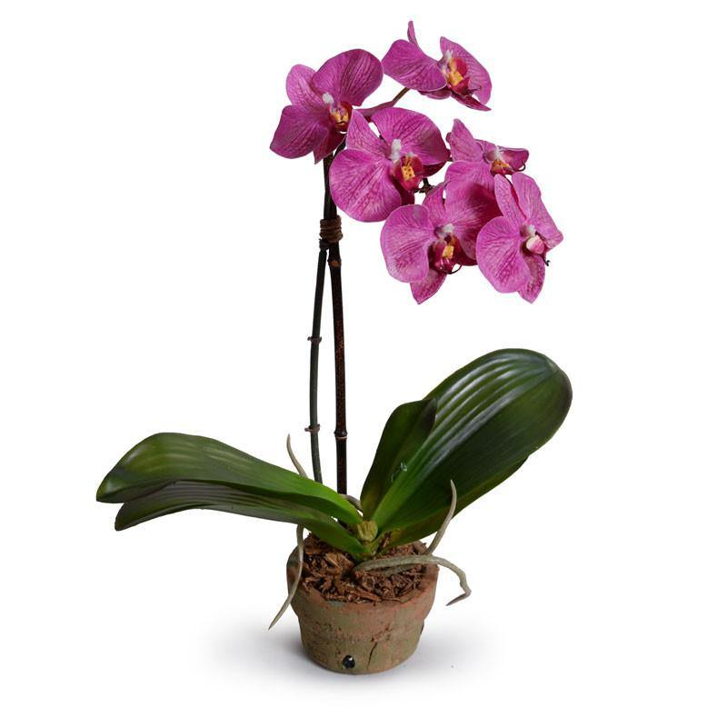 Phalaenopsis Orchid in Rustic Terracotta - Fuchsia - New Growth Designs
