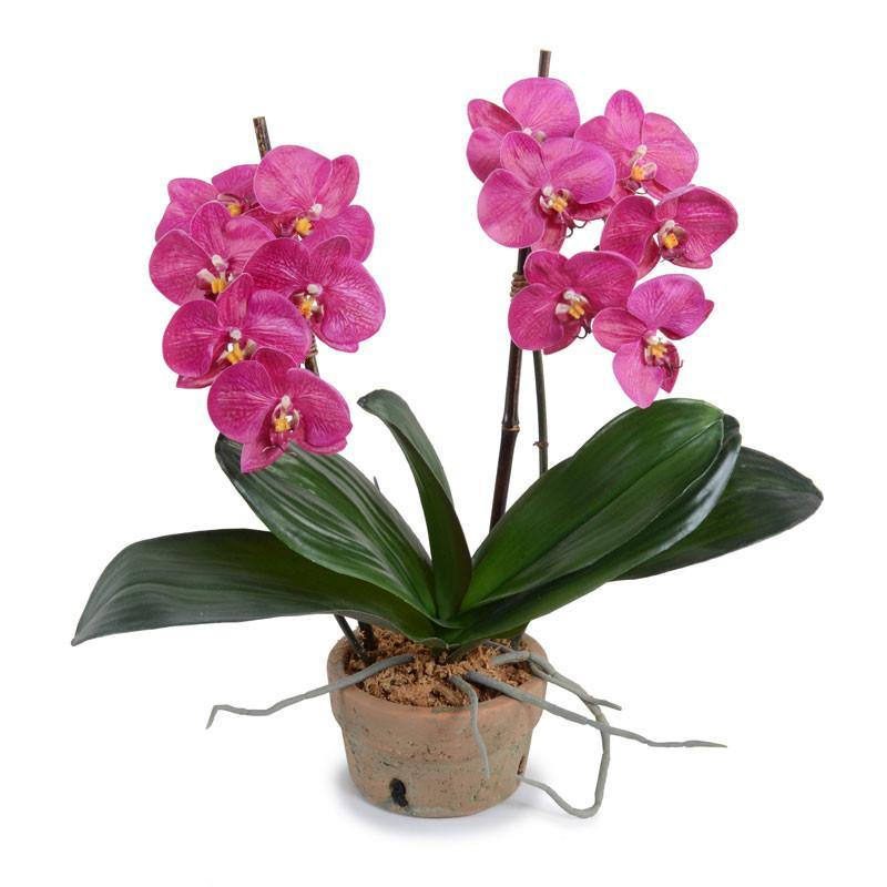 Phalaenopsis Orchid x2 in Rustic Terracotta - Fuchsia - New Growth Designs