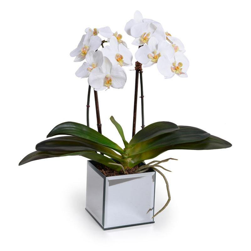 Phalaenopsis Orchid x2 in Mirror Vase - White - New Growth Designs