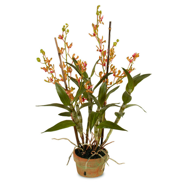 Dendrobium Orchid - New Growth Designs