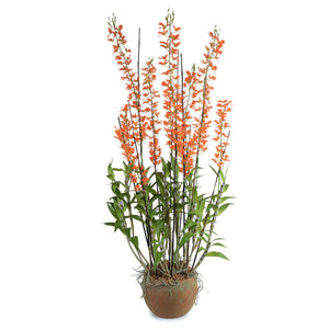Spider Orchid in Terracotta - Orange