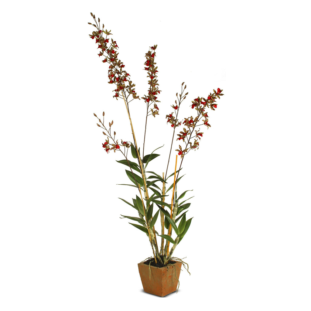 Dendrobium Orchid in Terracotta - Red-geen
