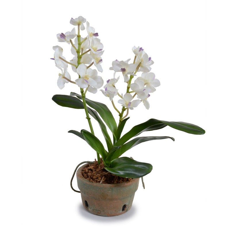 Vanda Orchid in Terracotta - White