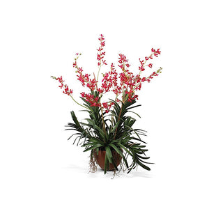 Vanda Orchid in Terracotta - Red