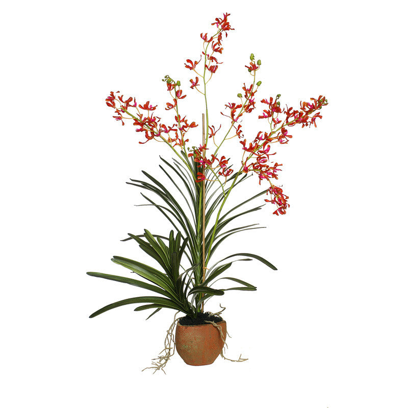 Vanda Orchid in Terracotta - Orange