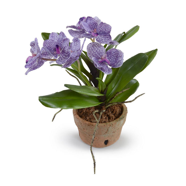 Vanda Orchid New Growth Designs