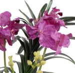 Vanda Orchid in Terracotta - Purple