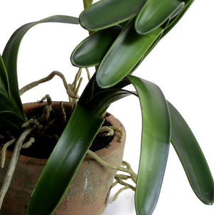 Vanda Orchid in Terracotta - Green