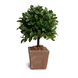 Laurel Leaf Topiary in Rustic Terracotta