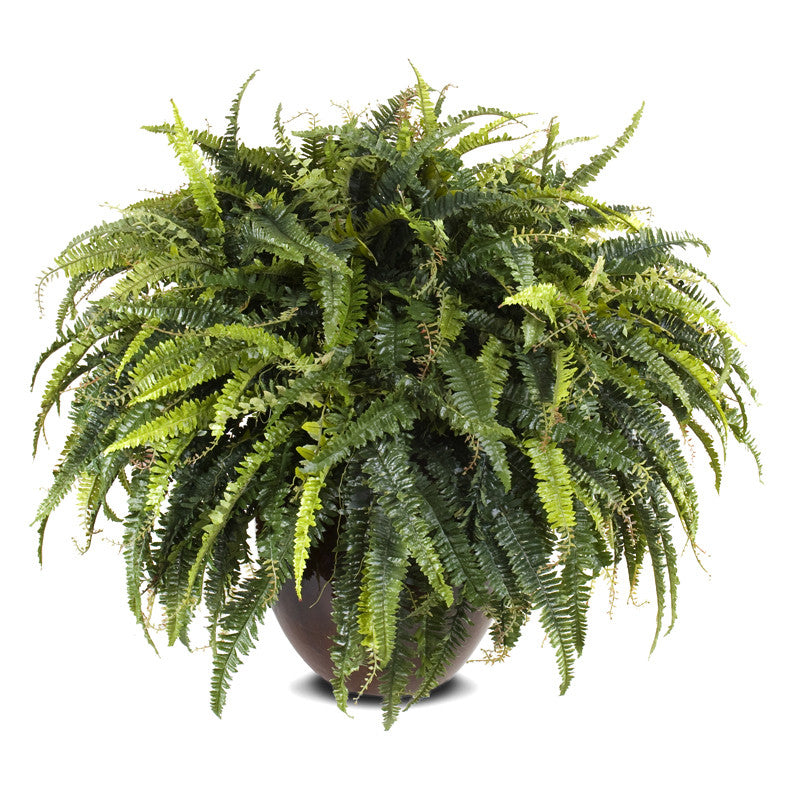 Forest Fern - New Growth Designs
