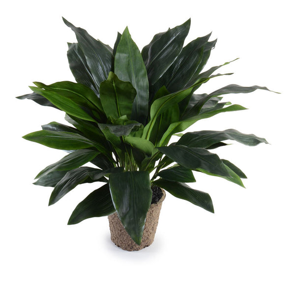 "32"" Aspidistra Plant - New Growth Designs"