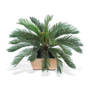 Cycas Palm - New Growth Designs