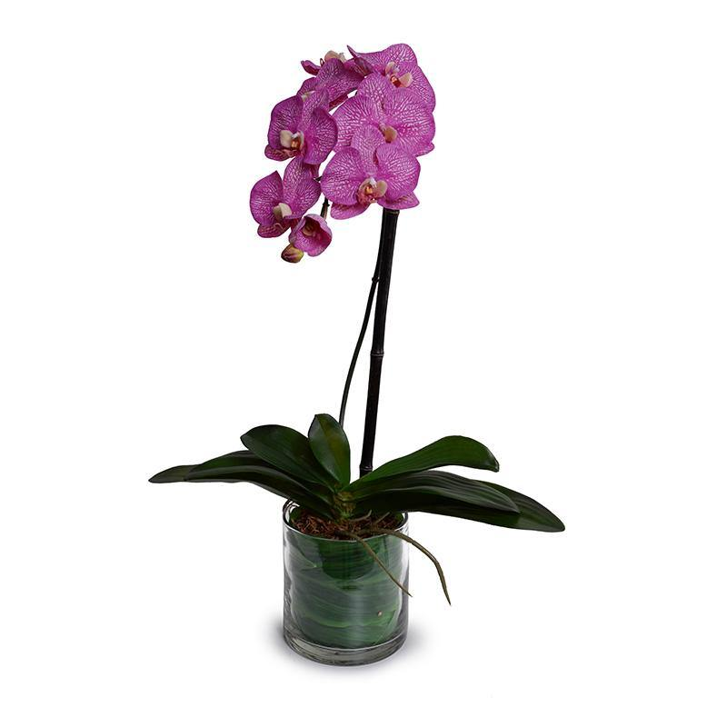 Phalaenopsis Orchid Leaf It - Fuchsia