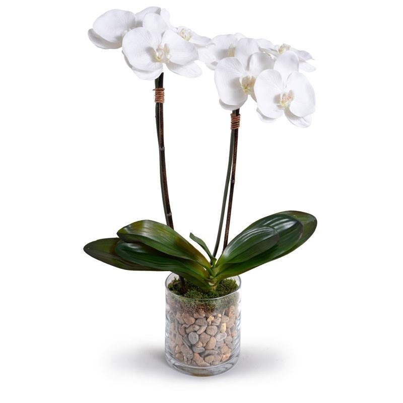 Phalaenopsis Orchid x2 in Short Glass Cylinder - White
