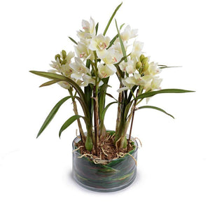 Cymbidium Orchid Leaf It - New Growth Designs