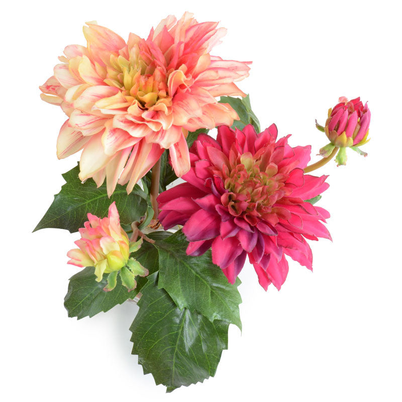 Dahlia Arrangement - New Growth Designs