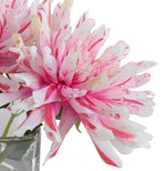 Dahlia Cutting in Glass - Pink-White
