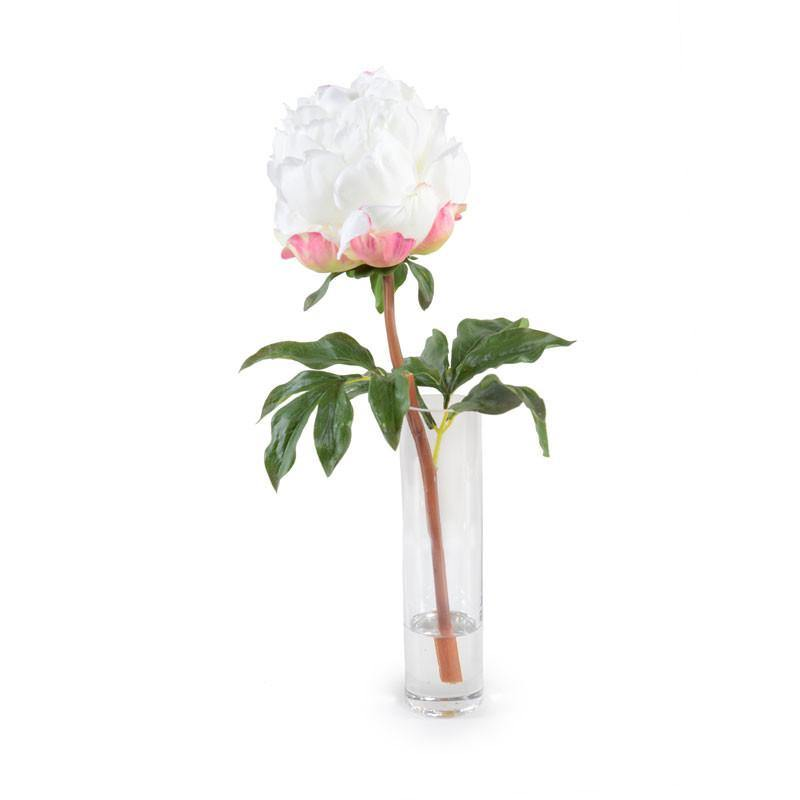 Peony in Glass Cylinder - White - New Growth Designs