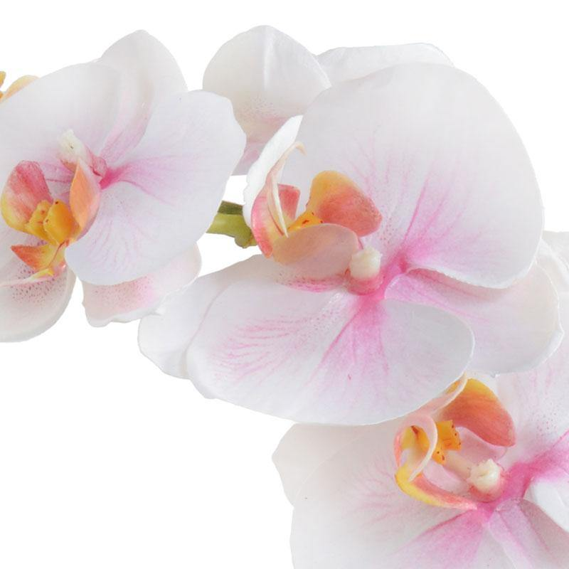 Phalaenopsis Orchid in Tall Glass Cylinder - White Pink