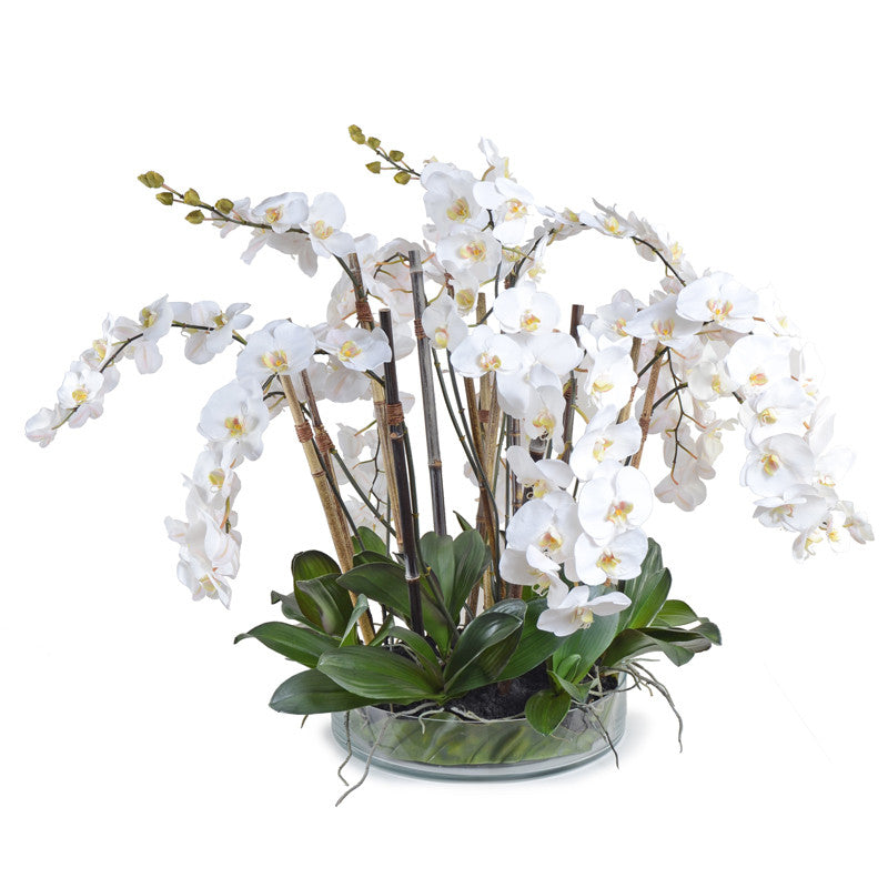 Phalaenopsis Orchid x14 Leaf It - White