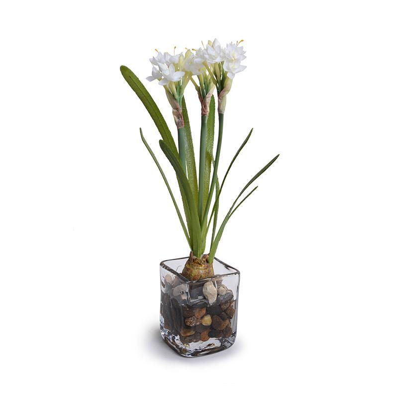 Paperwhite Narcissus - New Growth Designs