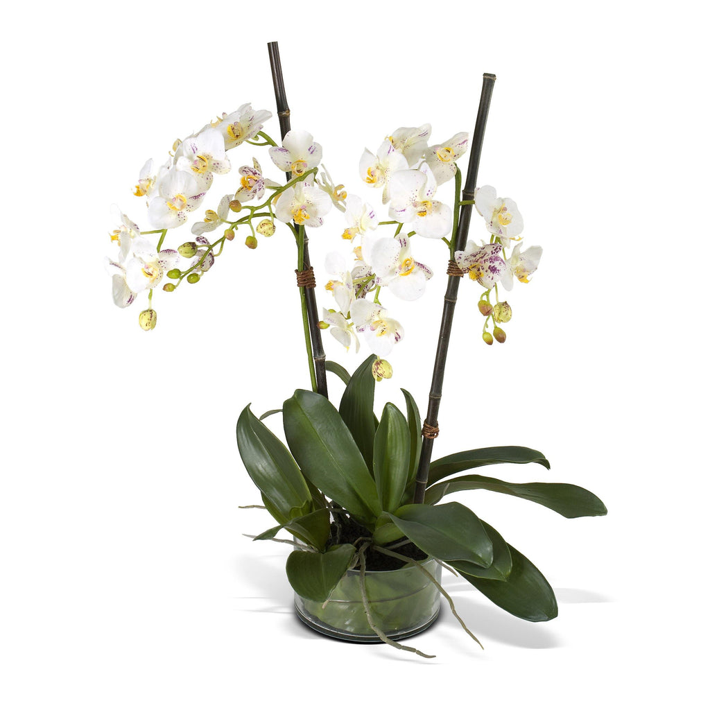 Phalaenopsis Orchid x2 Leaf It - White Purple - New Growth Designs