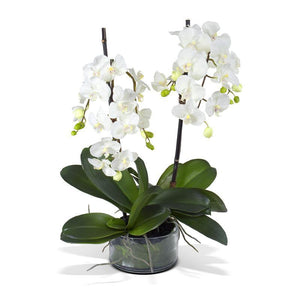 Phalaenopsis Orchid x2 Leaf It - White - New Growth Designs