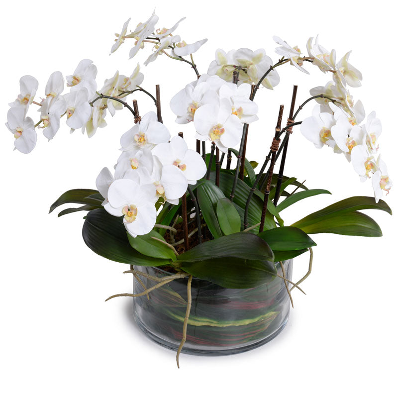 Phalaenopsis Orchid x9 Leaf It - White