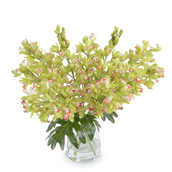 Cymbidium Orchid Bouquet - New Growth Designs
