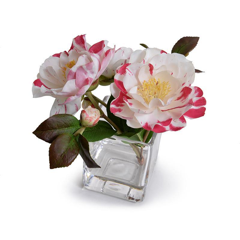 Camellia, Red-white - New Growth Designs