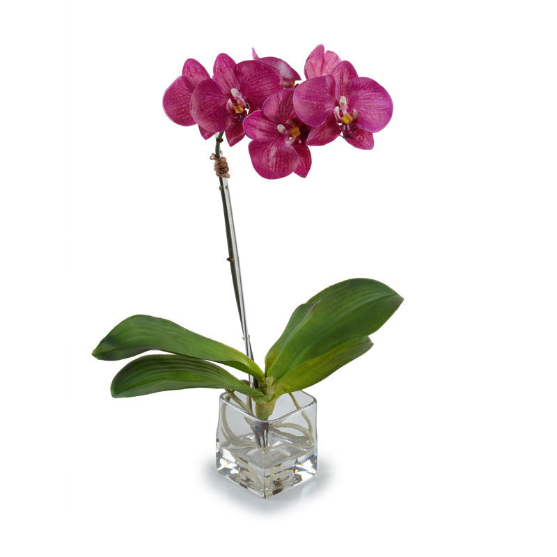 Phalaenopsis Orchid in Glass Cube - Fuchsia