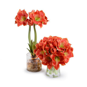 Amaryllis in Glass - Orange