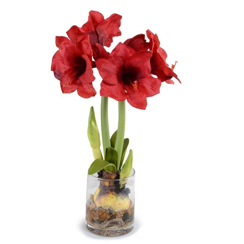 Amaryllis in Glass - Red