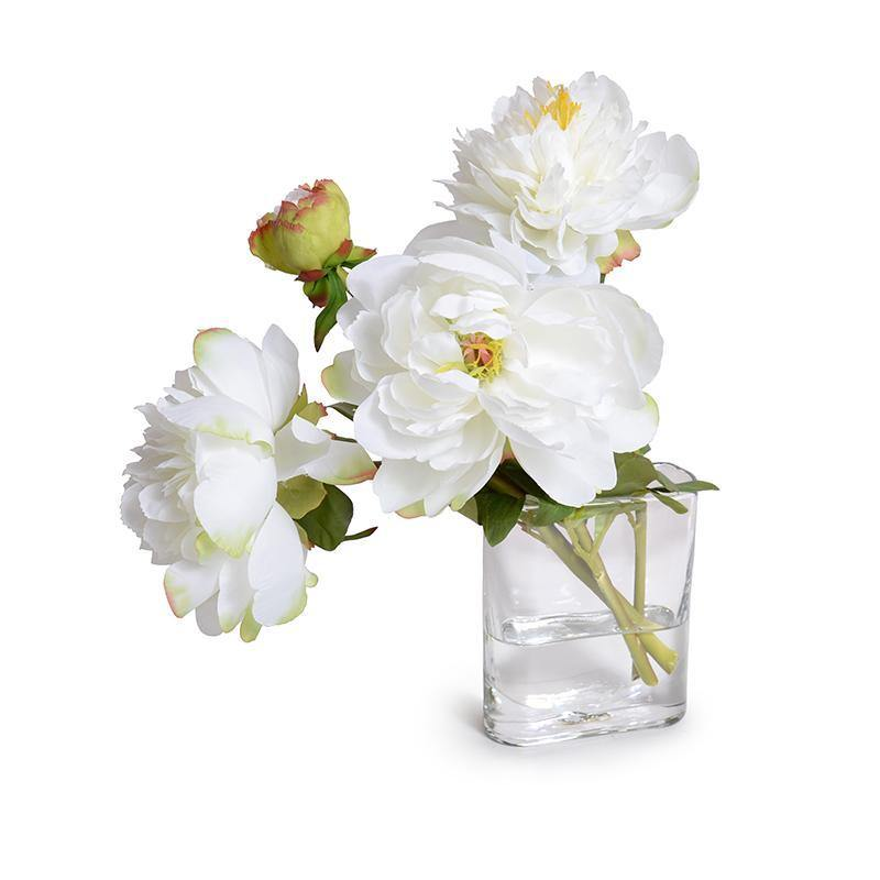 Peony Cutting in Glass Envelope - White - New Growth Designs