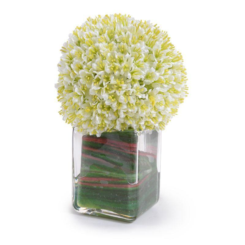 Allium Cube - New Growth Designs