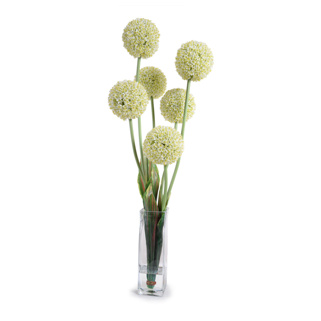 Allium in Glass Column - White - New Growth Designs