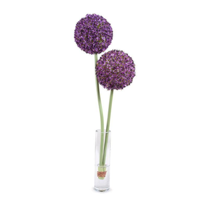 Allium in Glass Cylinder - Purple w/o Leaves - New Growth Designs