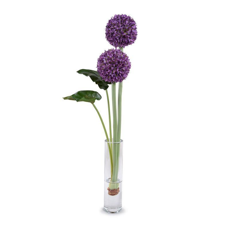Allium in Glass Cylinder - Purple - New Growth Designs