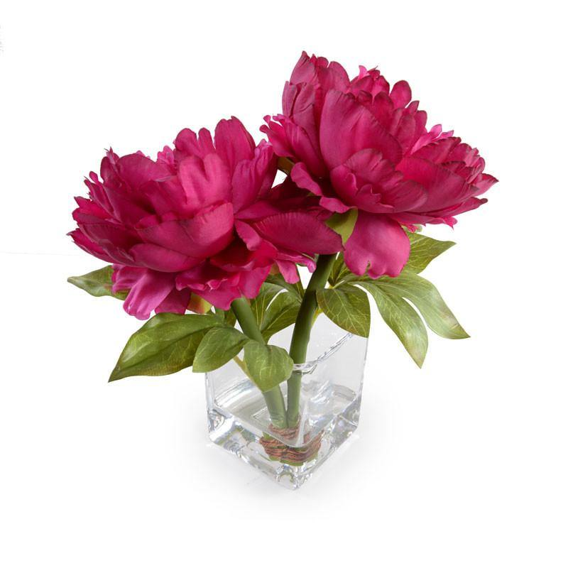 Peony Cutting - Beauty - New Growth Designs