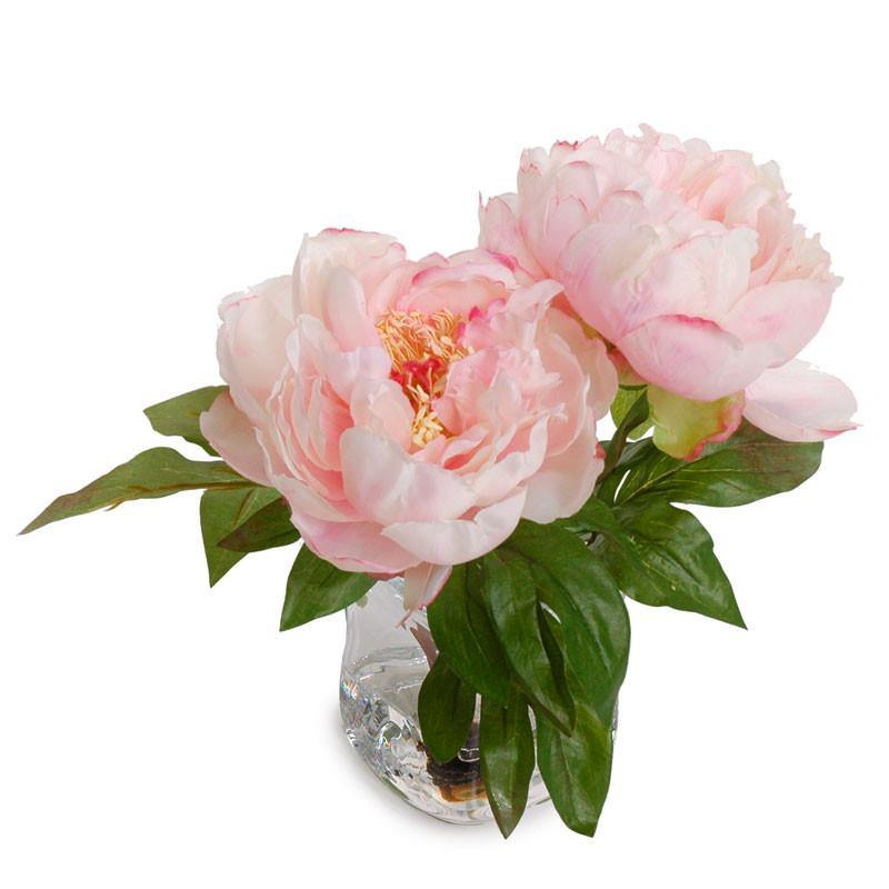 Peony Cutting - Pink - New Growth Designs