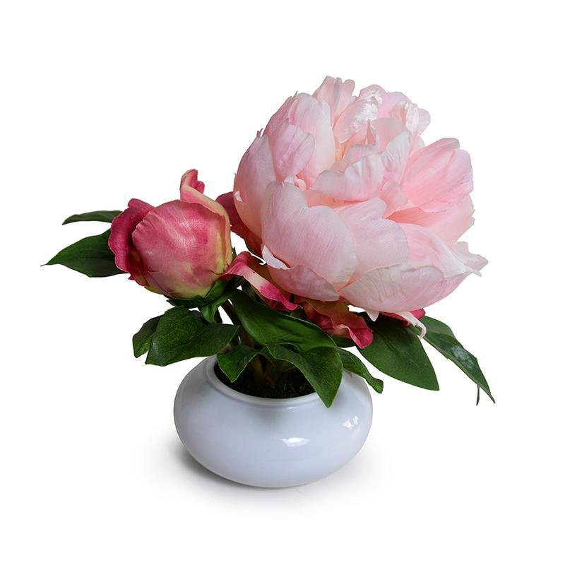 Peony Cutting in Porcelain Bowl - Pink - New Growth Designs