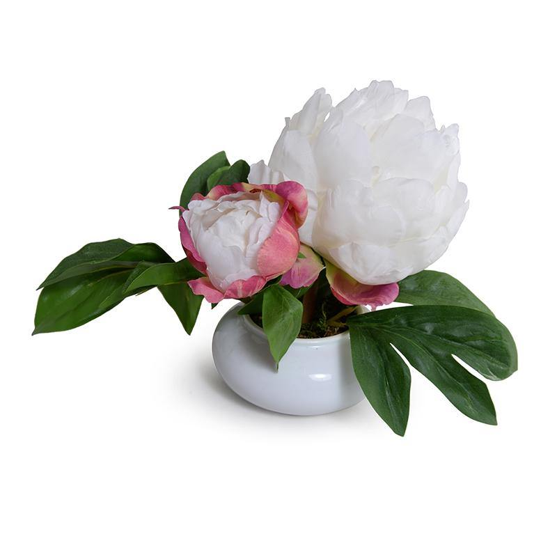 Peony Cutting in Porcelain Bowl - White - New Growth Designs