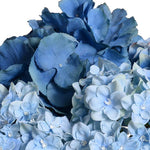 Hydrangea Bouquet in Glass