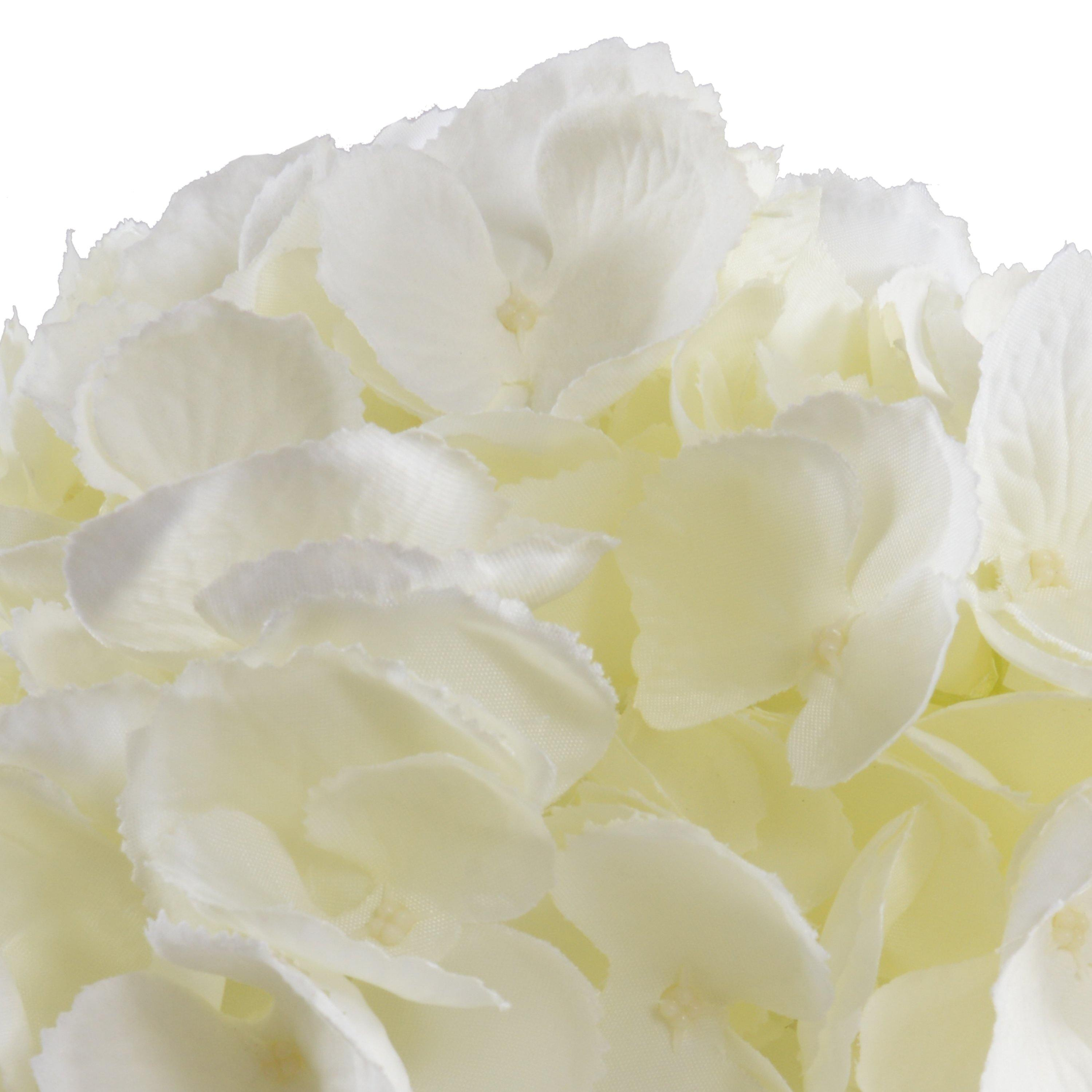 Hydrangea Cutting - Cream