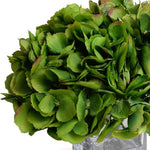 Hydrangea Arrangement - Green-Red