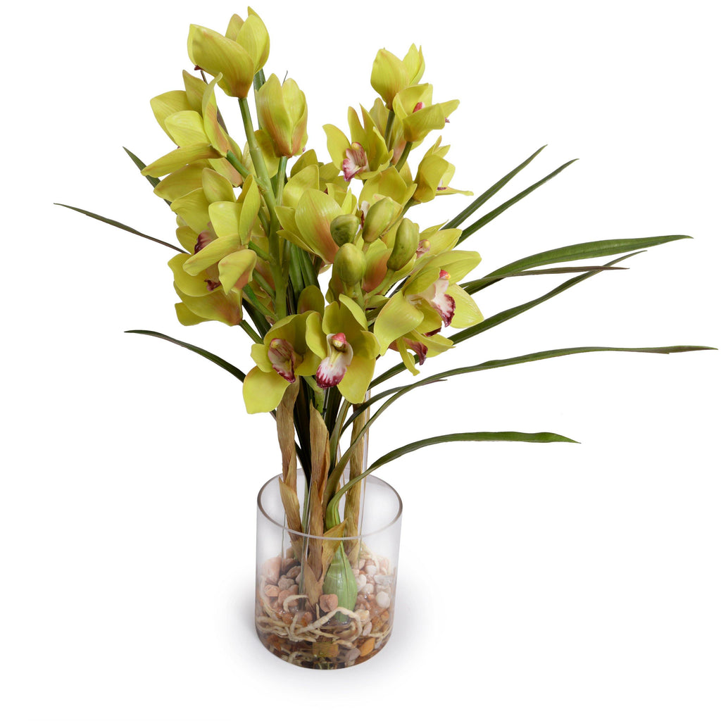 Cymbidium Orchid (Large) - Green ...