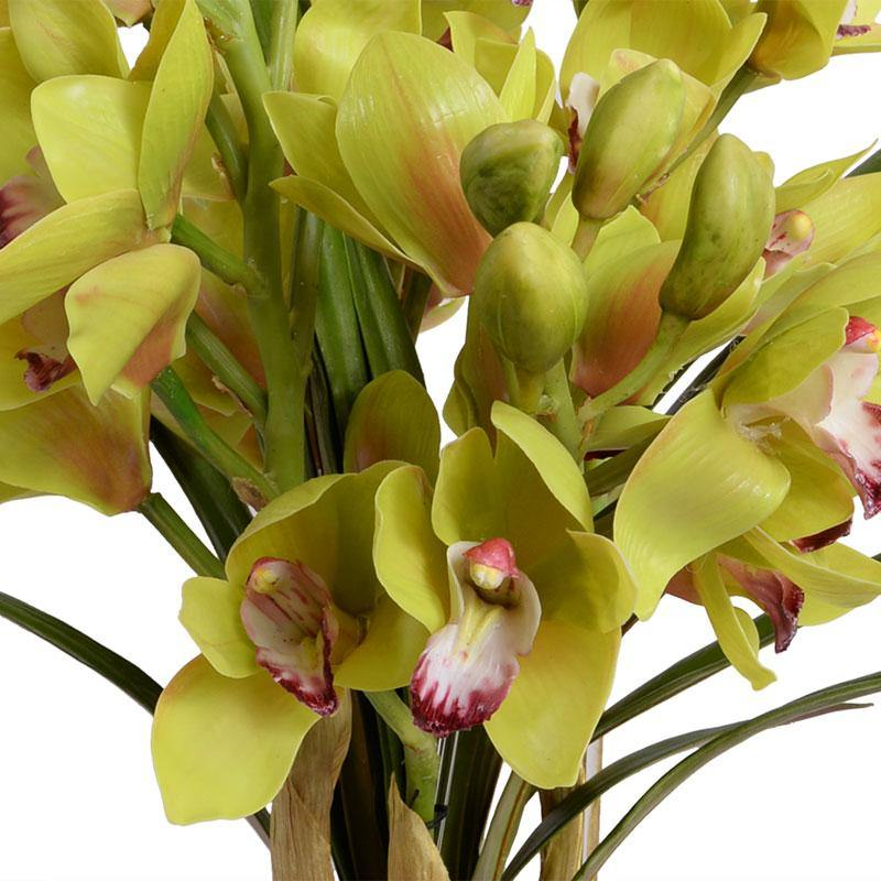 Cymbidium Orchid (Large) - Green